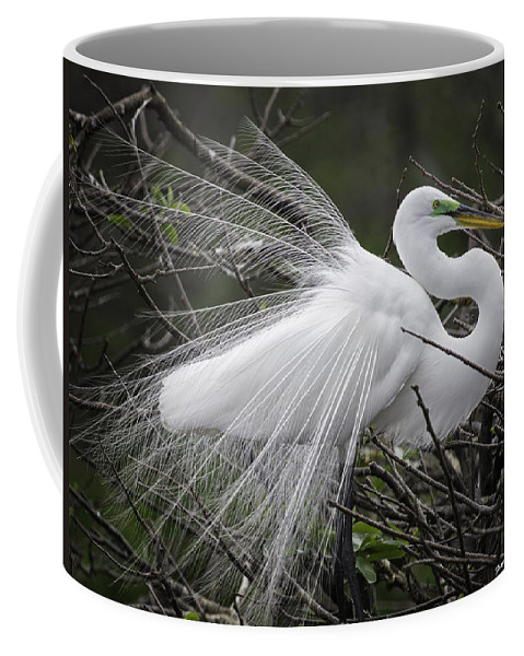 Florida Coffee Mug featuring the photograph Great Egret Preening by Fran Gallogly