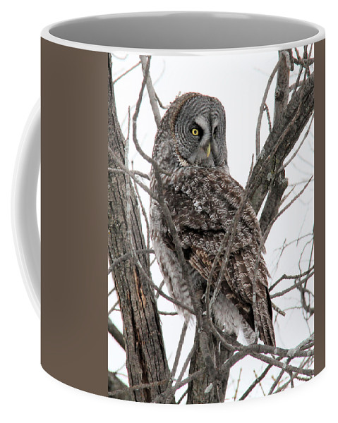 Great Gray Owl Coffee Mug featuring the photograph Great Gray Owl by Doris Potter