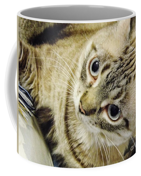 Cat Coffee Mug featuring the photograph Missing You Baby Girl by D Hackett