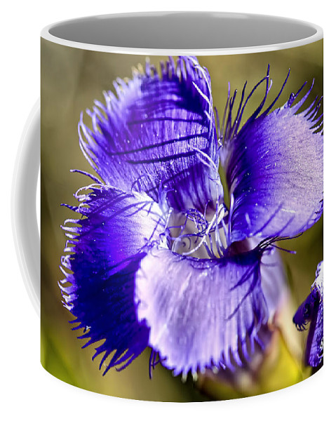 Greater Fringed Gentian Coffee Mug featuring the photograph Greater Fringed Gentian by Teresa Zieba
