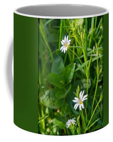 Canvas Coffee Mug featuring the photograph Greater Stitchwort Stellaria by Mark Llewellyn