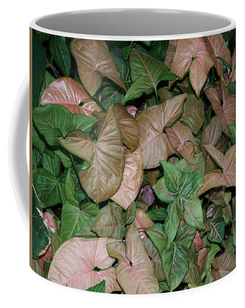 Plant Coffee Mug featuring the photograph Green And Brown Leaves by Geoffrey McLean