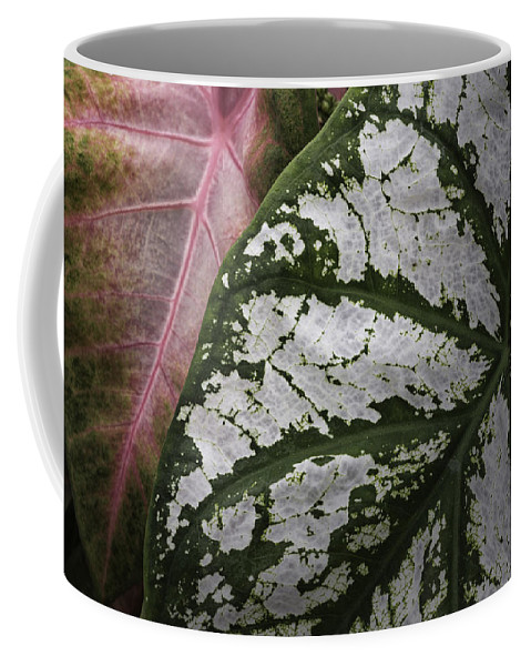Leaves Coffee Mug featuring the photograph Green And Pink Caladiums by Fran Gallogly