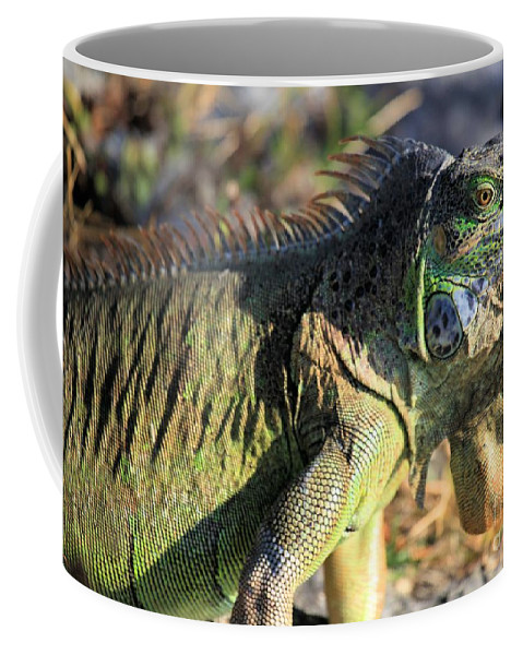 Iguana Coffee Mug featuring the photograph Green Day by Adam Jewell
