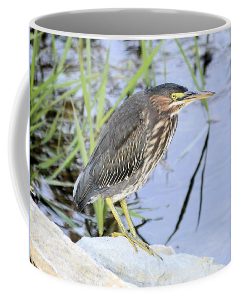 Heron Coffee Mug featuring the photograph Green Heron 2 by Bonfire Photography
