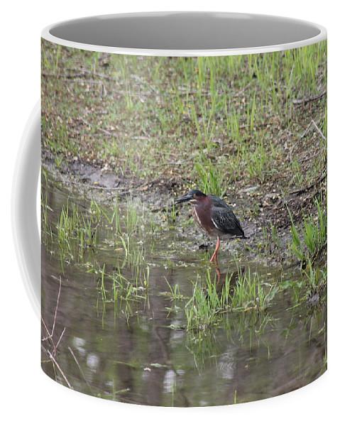 Green Heron Coffee Mug featuring the photograph Green Heron Along Shore by Wayne Williams