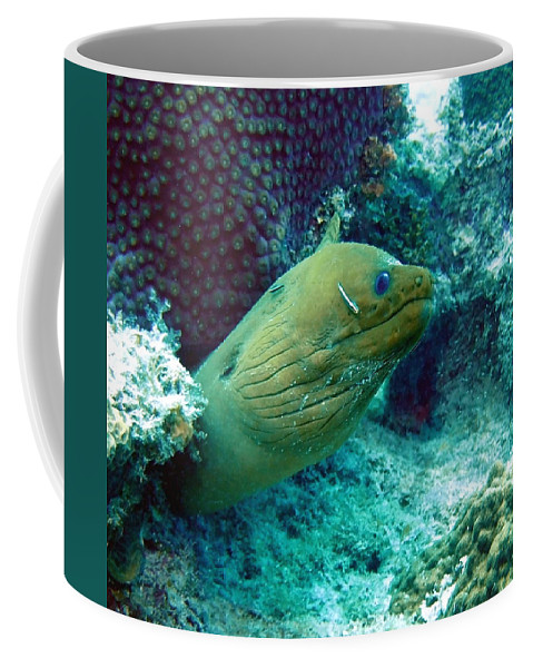 Nature Coffee Mug featuring the photograph Green Moray Eel With Cleaning Fish by Amy McDaniel