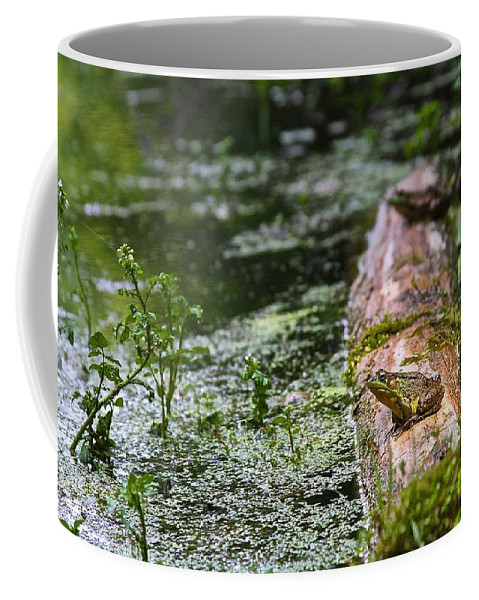 Frog Coffee Mug featuring the photograph Green by Tim Schmidt