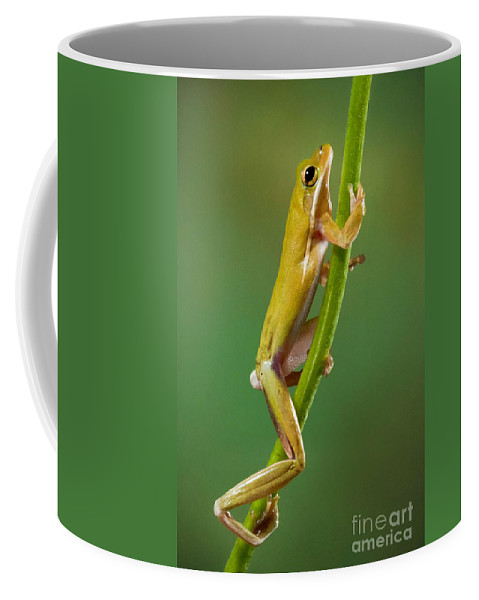 Green Tree Frog Coffee Mug featuring the photograph Green Tree Frog Climbing by Jerry Fornarotto