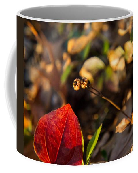 Greenbriar Coffee Mug featuring the photograph Greenbriar Leaf And Wintergreen Seedpod by Douglas Barnett