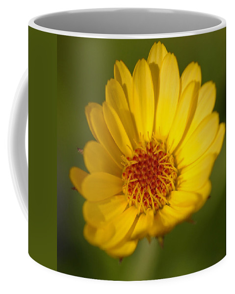 Macro Coffee Mug featuring the photograph Greeting The Morning Sun by Liz Mackney