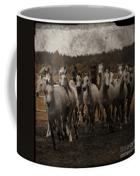 Horse Coffee Mug featuring the photograph Grey Horses by Angel Ciesniarska