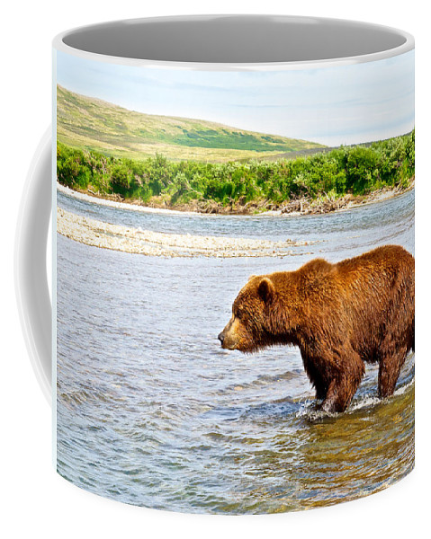 Grizzly Bear Determined To Catch A Salmon This Time In The Moraine River Coffee Mug featuring the photograph Grizzly Bear Determined To Catch A Salmon This Time In The Moraine River by Ruth Hager