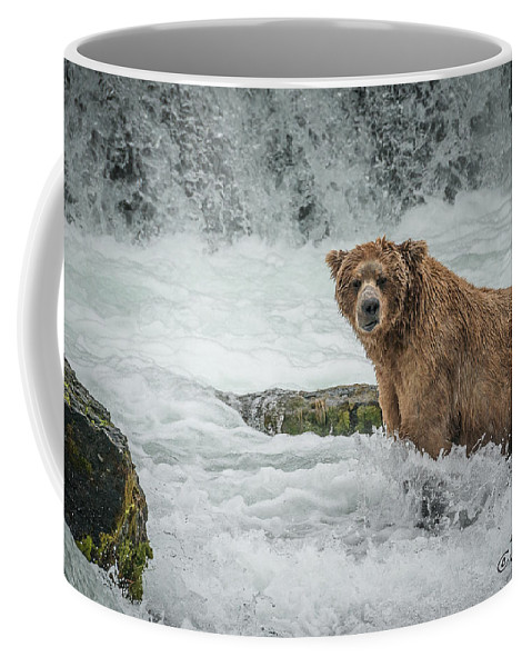 Alaska Coffee Mug featuring the photograph Grizzly Stare by Joan Wallner