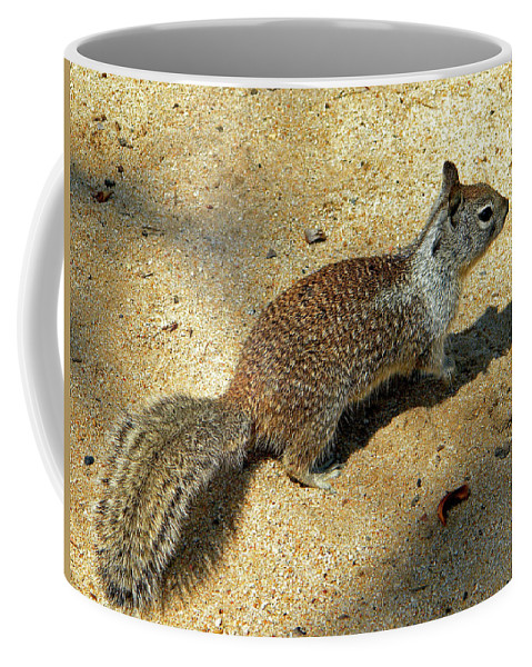 Ground Squirrel Coffee Mug featuring the photograph Ground Squirrel by Frank Wilson