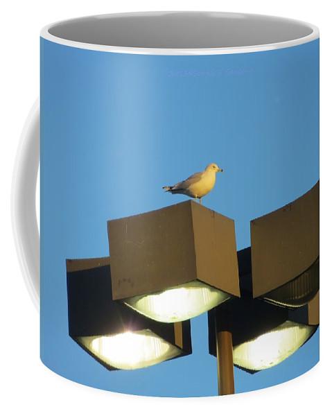 Sea Gull Coffee Mug featuring the photograph Gull On Guard by Sonali Gangane