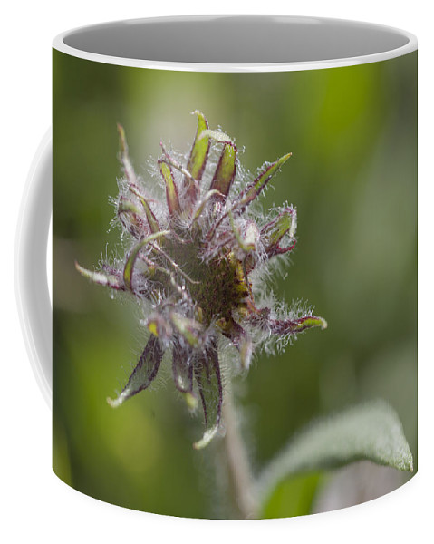 Wild Bergamot Coffee Mug featuring the photograph Hairy Scary by Fran Riley