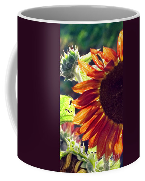 Sunflower Coffee Mug featuring the photograph Half Of A Sunflower by Madeline Ellis
