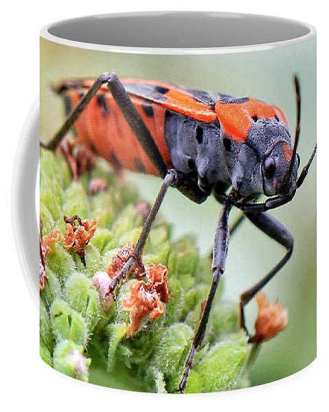 Bugs Coffee Mug featuring the photograph Halloween Attire by Geoff Crego