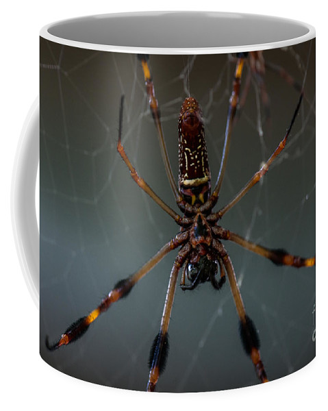 Halloween Coffee Mug featuring the photograph Halloween Spider by Dale Powell