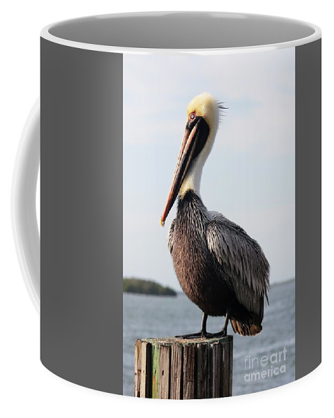 Pelican Coffee Mug featuring the photograph Handsome Brown Pelican by Carol Groenen