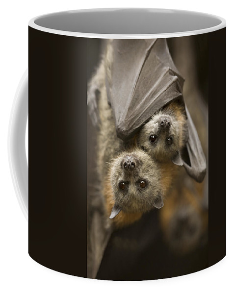Bats Coffee Mug featuring the photograph Hang In There by Mike Dawson