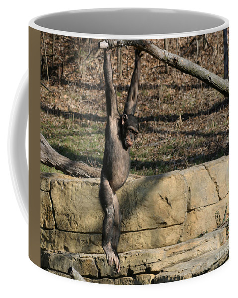 Chimpanzee Coffee Mug featuring the photograph Hanging Chimp 365 by Gary Gingrich Galleries