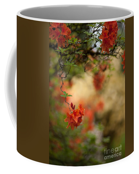 Rhodies Coffee Mug featuring the photograph Hanging by Mike Reid