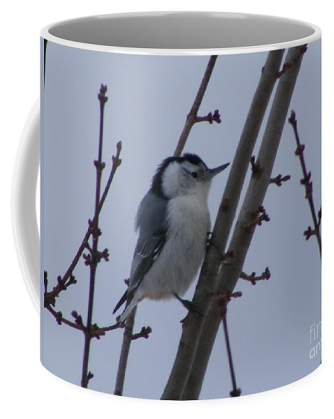 Vermont Coffee Mug featuring the photograph Hanging Out by Susan Russo