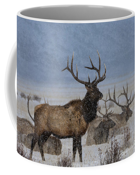 Elk Coffee Mug featuring the photograph Hanging Out With The Boys by Wildlife Fine Art