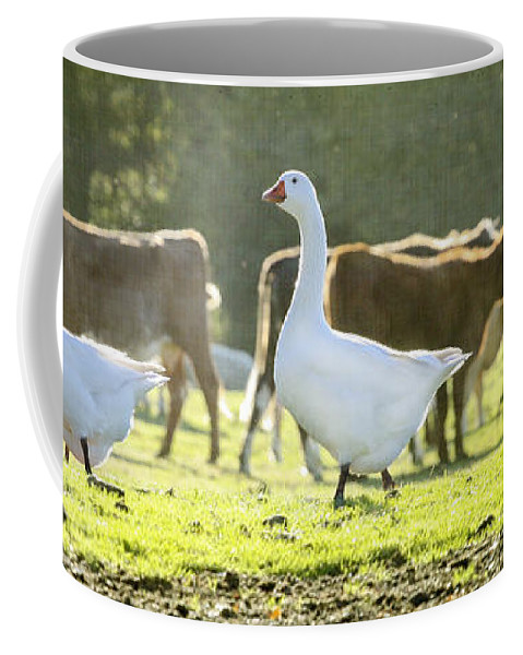 Bird Coffee Mug featuring the photograph Hanging With The Herd by Terri Waters