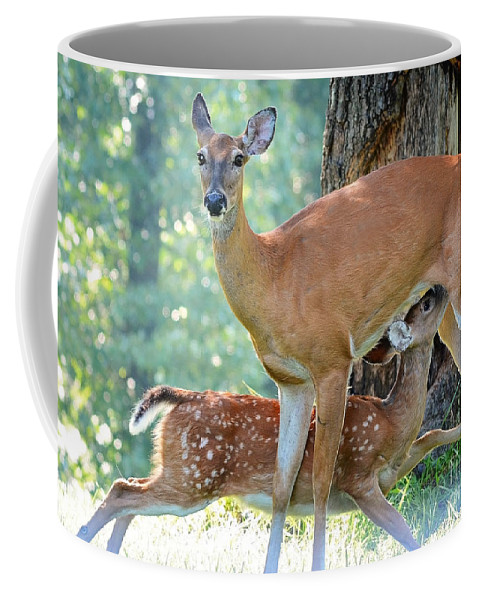 Nature Coffee Mug featuring the photograph Happy Meal by Nava Thompson
