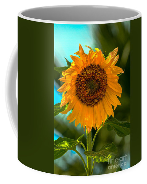 Sunflower Coffee Mug featuring the photograph Happy Sunflower by Robert Bales