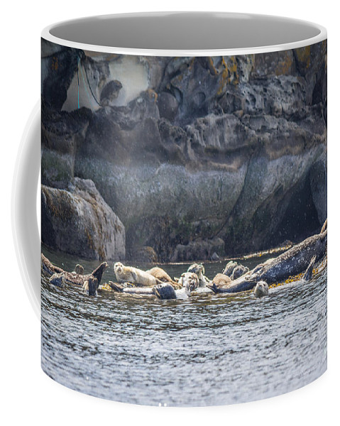 Harbour Seals Coffee Mug featuring the photograph Harbour Seals Resting by Alanna DPhoto