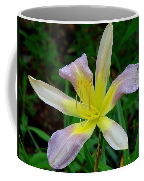 Fine Art Coffee Mug featuring the photograph Harmony by Rodney Lee Williams