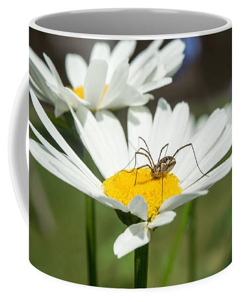 Alberta Coffee Mug featuring the photograph Harvastman On Daisy by Douglas Barnett