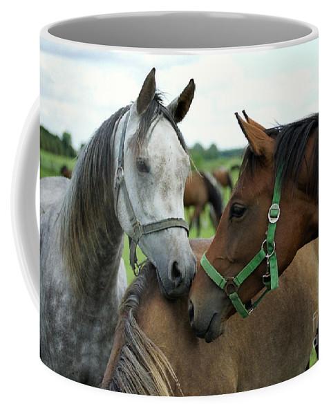 Horse Coffee Mug featuring the photograph Having A Chat by Angel Tarantella