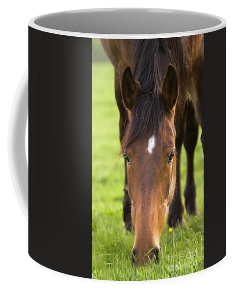 Horse Coffee Mug featuring the photograph Having A Lunch by Angel Ciesniarska