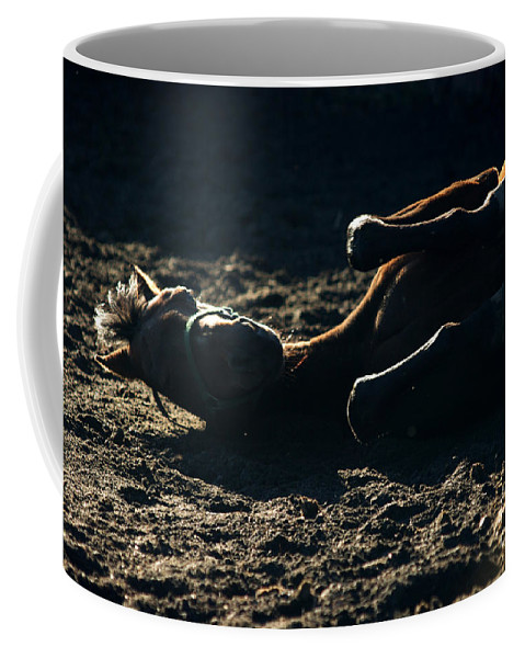 Horse Coffee Mug featuring the photograph Having Fun by Angel Ciesniarska