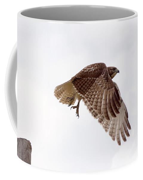 Birds Coffee Mug featuring the photograph Hawk In Flight by Lori Tordsen