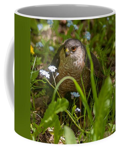 Bird Coffee Mug featuring the photograph Hawk In The Grass by Richard Kitchen