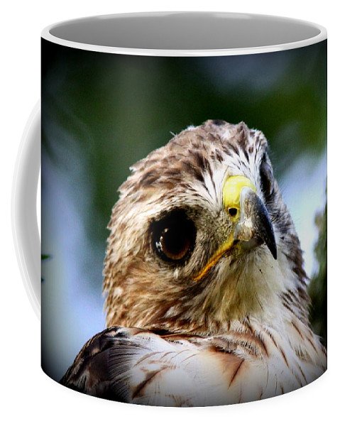 Young Coffee Mug featuring the photograph Hawk - Raptor - Living The Good Life by Travis Truelove