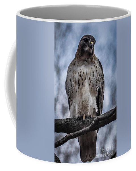 Hawk Coffee Mug featuring the photograph Hawk Red Tailed by Ronald Grogan
