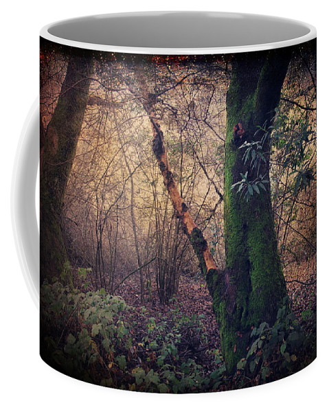 Redwood Regional Park Coffee Mug featuring the photograph He Filled My Days With Endless Wonder by Laurie Search