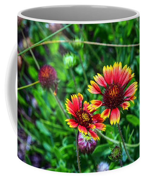 Wild Flowers Coffee Mug featuring the photograph He Loves Me by Sennie Pierson