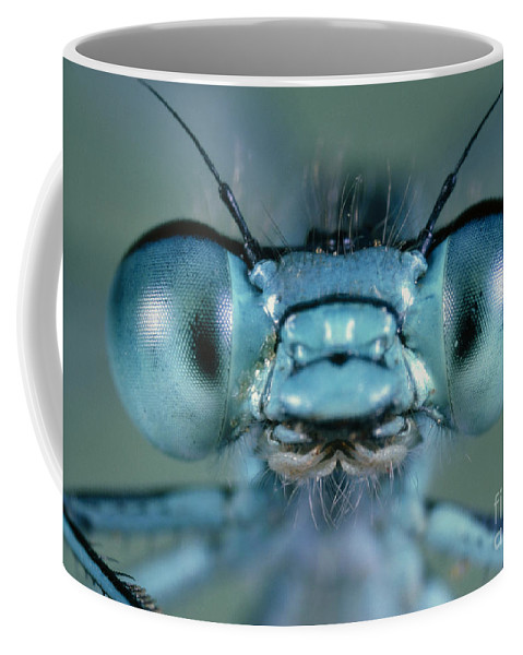 Agrion Coffee Mug featuring the photograph Head And Compound Eyes Of Damselfly by Nuridsany Perennou