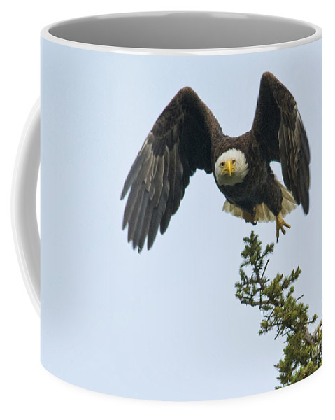 Eagles Coffee Mug featuring the photograph Heading Out by Claudia Kuhn