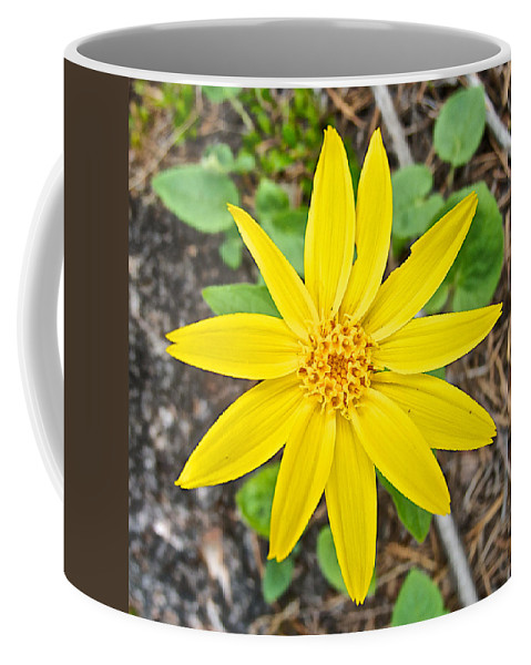 Heartleaf Arnica In Lake Louise Rv Park In Banff National Park Coffee Mug featuring the photograph Heartleaf Arnica In Lake Louise Rv Park In Banff National Park-alberta by Ruth Hager