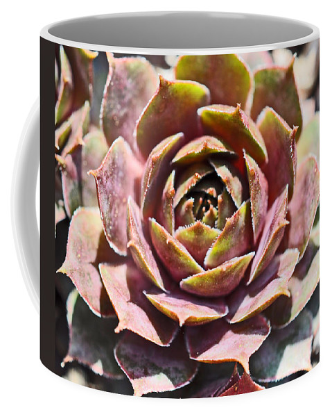 Hens And Chicken Coffee Mug featuring the photograph Hen And Chicks by Brittany Horton