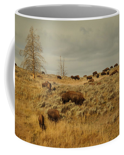 Buffalo Coffee Mug featuring the photograph Herd Of Buffalo by Jeff Swan